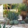 palm springs landscaping Awesome palm springs landscape design landscape