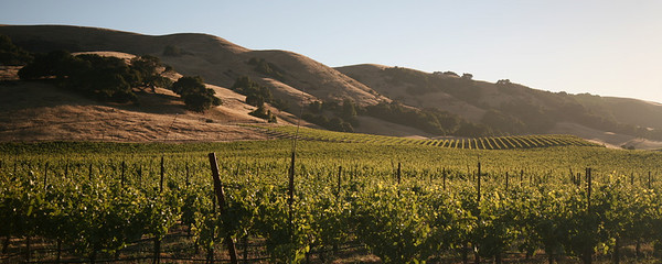 Southern end of Napa Valley, off CA-29