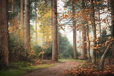 Autumn colors at the Palzt