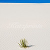 This is a shot from White Sands National Monument in New Mexico. WS is a field of bright white sand dunes composed of gypsum crystals. The dunes constantly change shape and slowly move downwind, covering the plants in their path. Some species of plants, like the Yucca, however, can grow rapidly enough to avoid being buried by the dunes. What looks like grass in this picture is actually the very top of such Yucca.