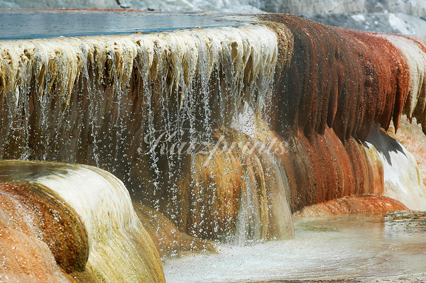 This is a close-up of the fascinating Mammoth Hot Springs in Yellowstone NP. Mammoth is a large hill of travertine that has been created over thousands of years as hot water from the spring cools to around 170°F and deposits layers of calcium carbonate. The brown, orange, and red colors  come from algae living in the warm pools which tint the white travertine.