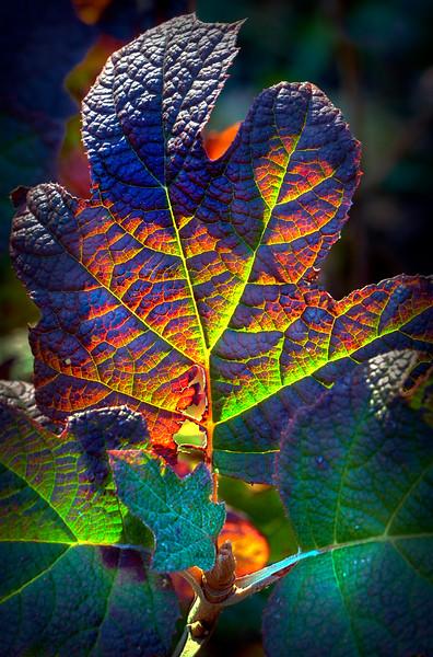 """Autumn Leaves #2,"" Chicago, 2010"
