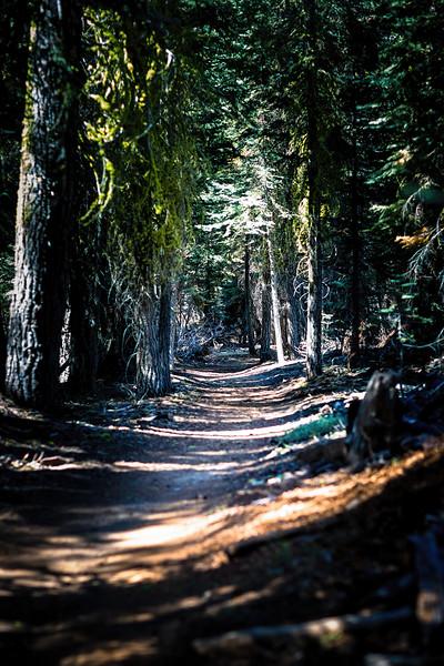 Waldweg #2