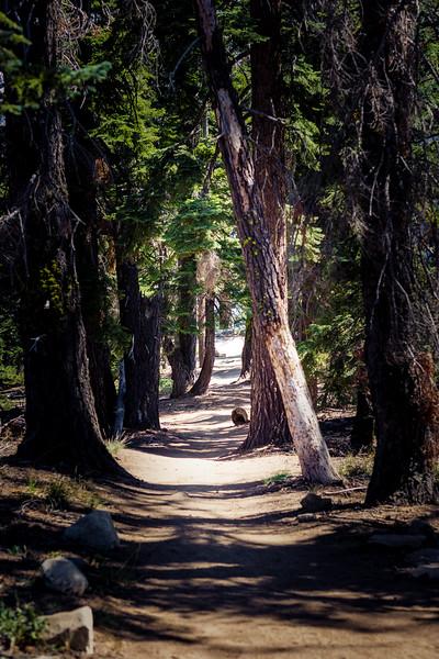 Waldweg #1