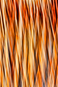 Abstract of water reeds at Bosque del Apache, New Mexico
