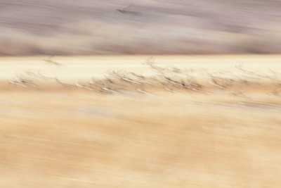 Abstract of ducks flying at Bosque del Apache, New Mexico