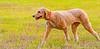 9/9/2012 - Corpus Christi Dog Group.