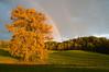 Afternoon light, near Saratoga Springs, New York
