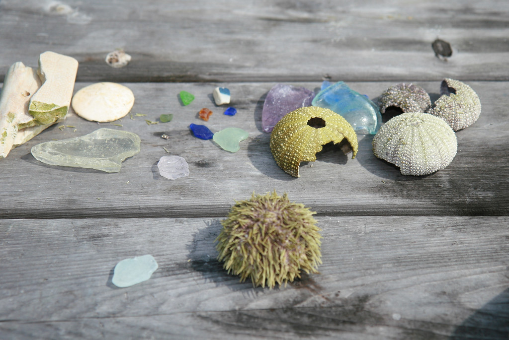Sea urchins, sea glass, sand dollars