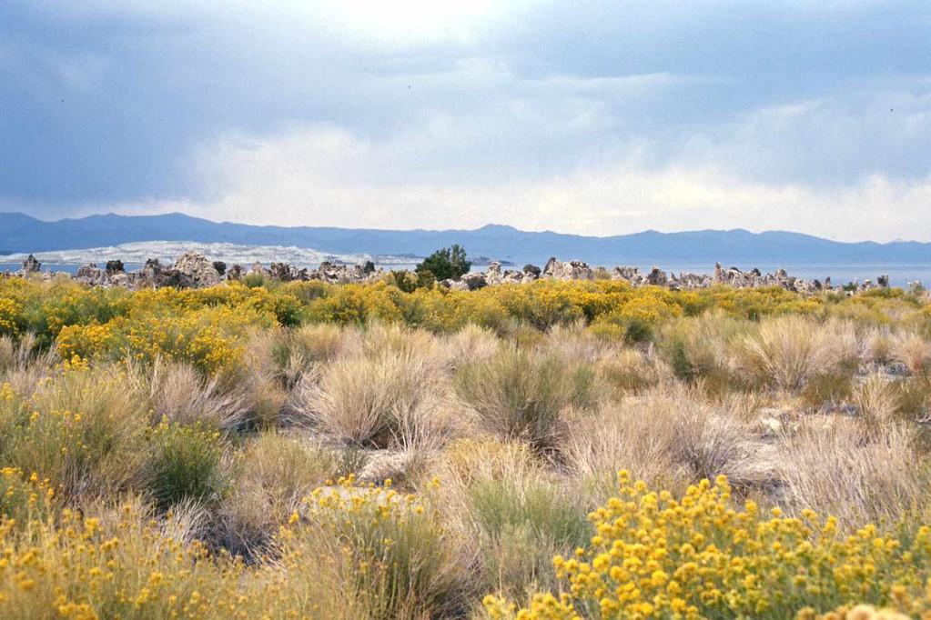 Mono Lake Nevada