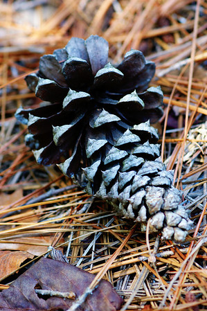 A lonely pinecone