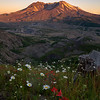 Wildflowers at Mt St Helens