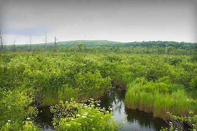 Finzel Swamp