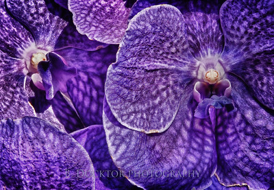 1003_NYBG Orchids_094_HDR