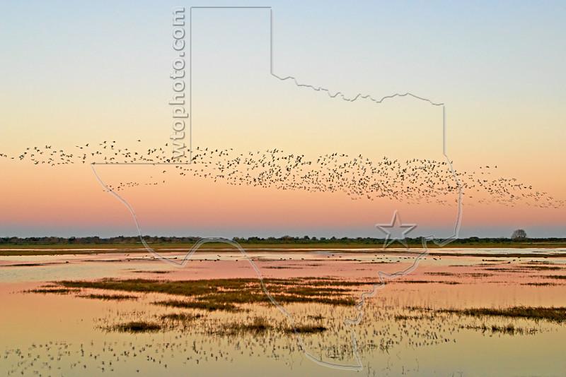 Sunrise Flight, Geese and Ducks,<br /> Brazoria National Wildlife Refuge, Texas