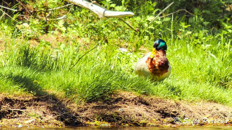 Sunning Amherst State Park