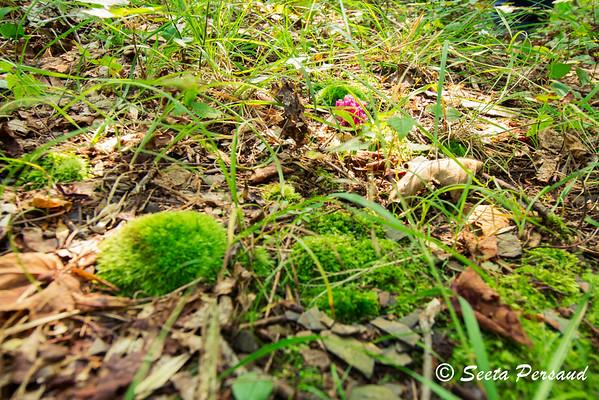 Forest Floor Magic