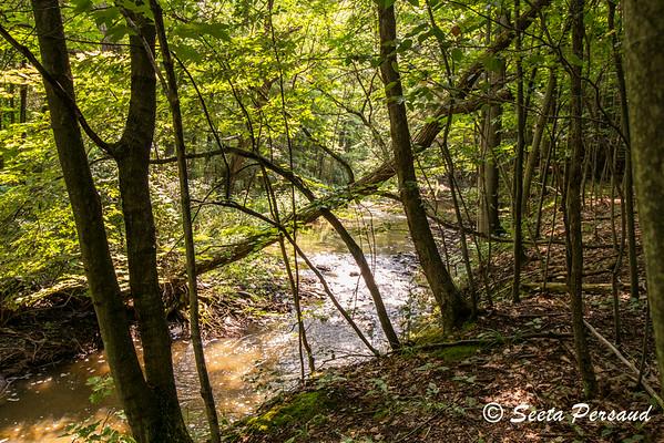 Big Sister Creek