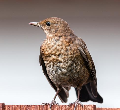 Birds and Macros 2011
