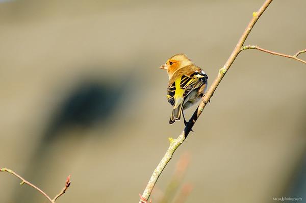 Birds and Macros 2013