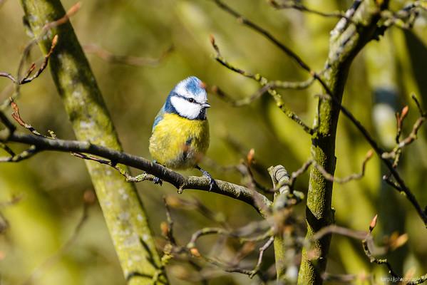 Birds and Macros 2014