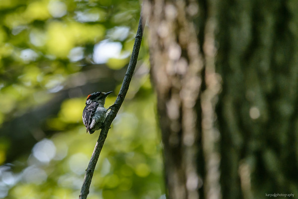 Great Swamp National Wildlife Refuge (Samstag 7. Juli 2012)