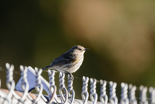 unknown bird
