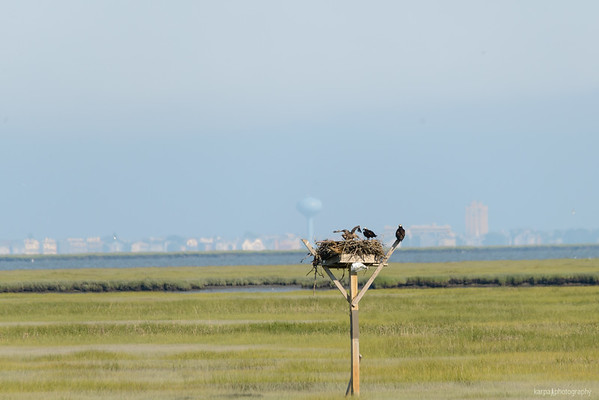 Edwin B. Forsythe National Wildlife Refuge (Freitag 6. Juli 2012)
