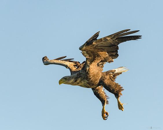 Feldberg Lake District – Eagle Tour