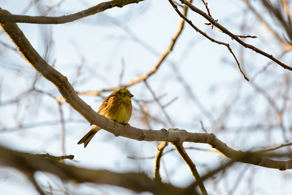 Polder Glies (Nature Reserve) 2013