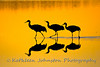 Sandhill Cranes, Bosque del Apache NWR, New Mexico