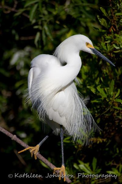 Egret, St. Augustine, FL