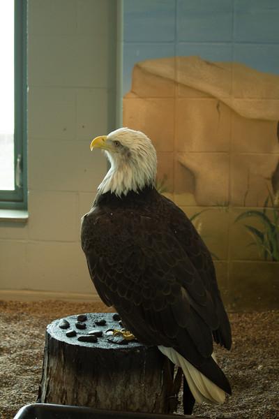 Columbia the Eagle