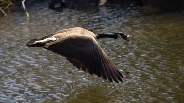 Reinstein Woods Nature Preserve
