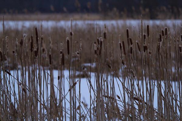 Montezuma National Wildlife Refuge Wetlands Complex