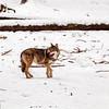 Wolfsgehege