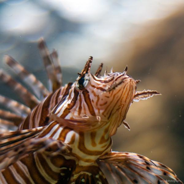 Sea Life Cuxhaven