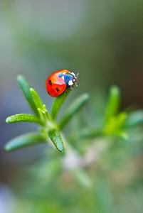 Lady Bug & Rosemary