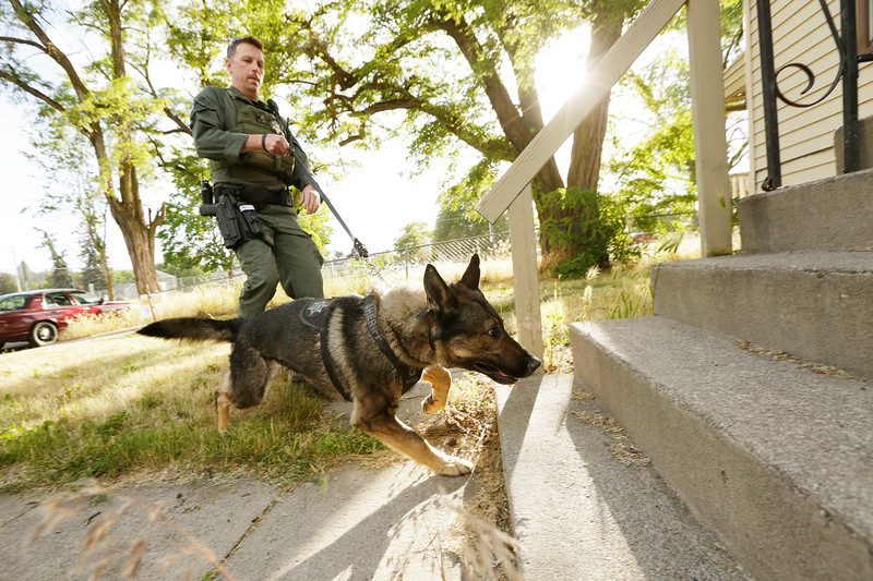 Spokane County Sheriff's Deputy Jason Hunt and his partner K9 Gunnar approach an unoccupied house during training in Spokane, Wash., Wednesday, June 13, 2018. (Young Kwak/The Inlander)