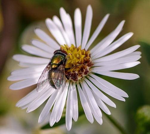 Backyard Fly