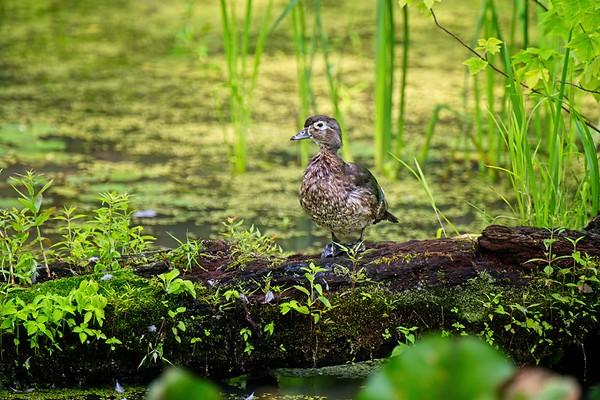 Beaver Marsh2021