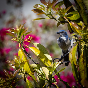 Spring Valley, California