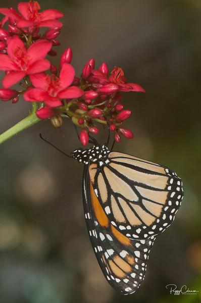 Butterfly World - Exotics