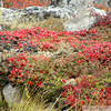 fall colours on the arctic tundra