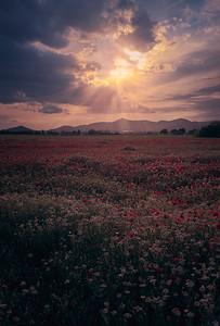 Sunset light A7R49766