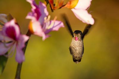 Hummingbird Favorites for Leza