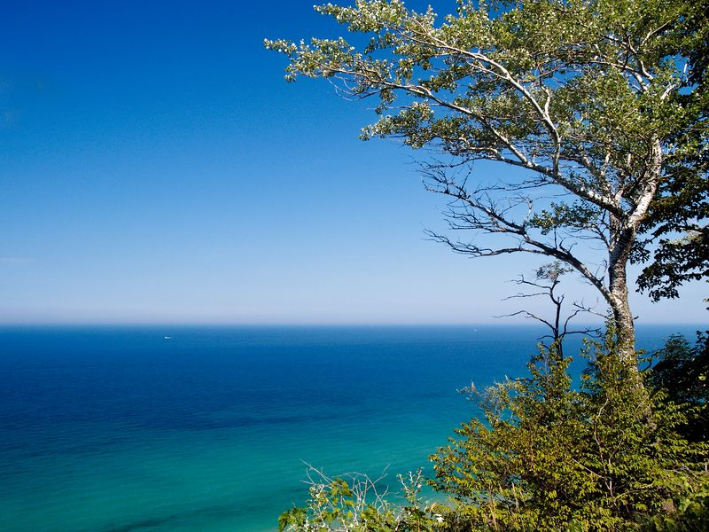 A solitary birch tree frames the view of Lake Michigan from the top of a dune on Michigan's west coast.