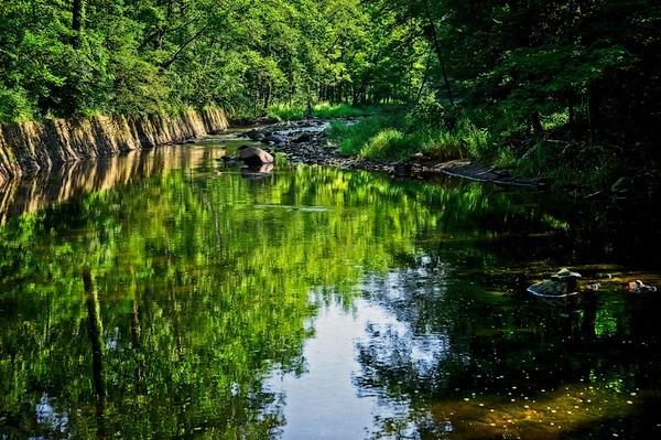Marcro shots at Hemlock Creek
