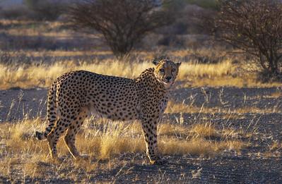 In the savanna 7R46117