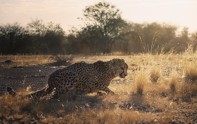 In the savanna 4 7R46028